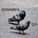 kyuai1